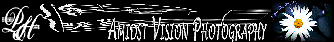 amidst vision photography banner