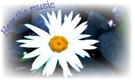 photoof daisy